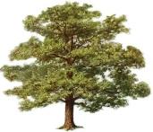 tree-clipart-4[1]