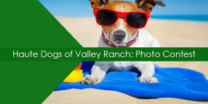 Haute Dogs of Valley Ranch
