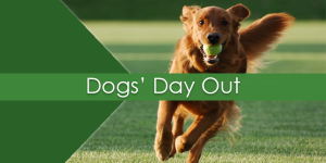 Dogs' Day Out_Home Page